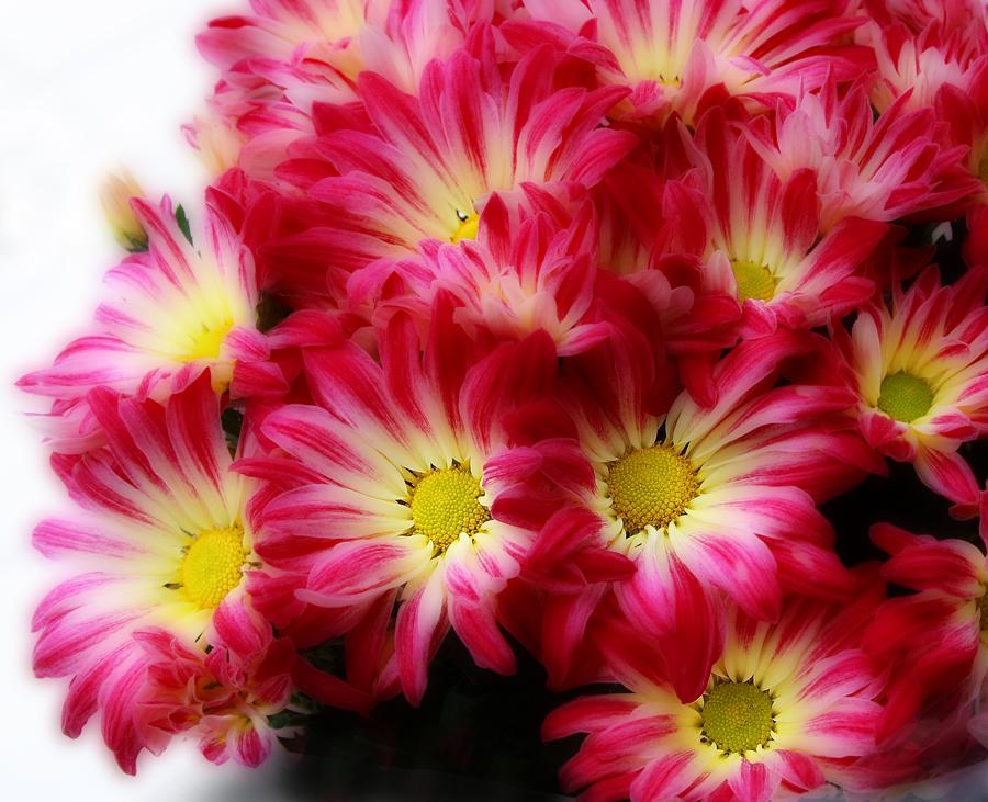 Картинки фото красивая с днем рождения хризантема, надписями няшка