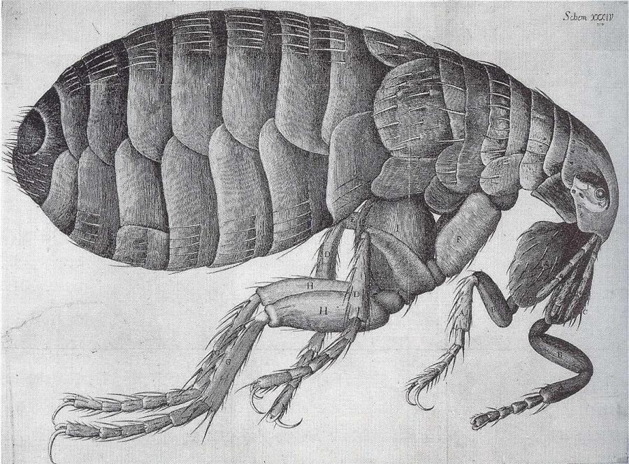 flea-picture-01